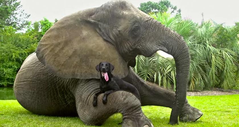 """Résultat de recherche d'images pour """"animals friends"""""""