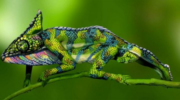 Is That A Chameleon Or Two Body-Painted Women? Here's The Answer