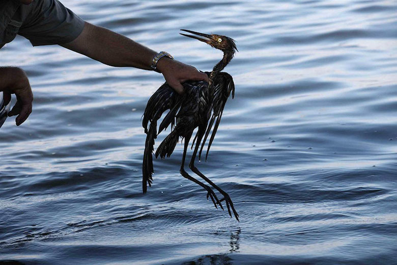 Look what happened to this bird stuck in an oil spill