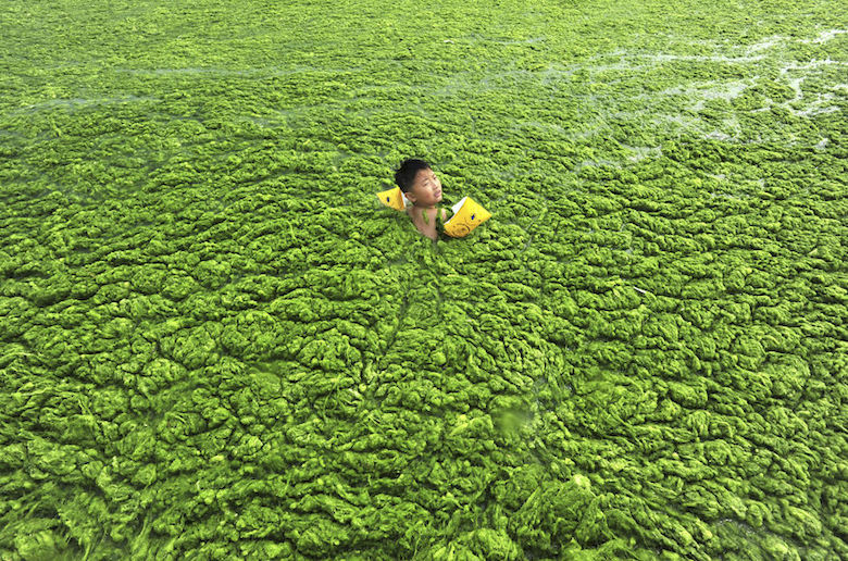 A boy swims in Algae-filled water in Qingdao, China