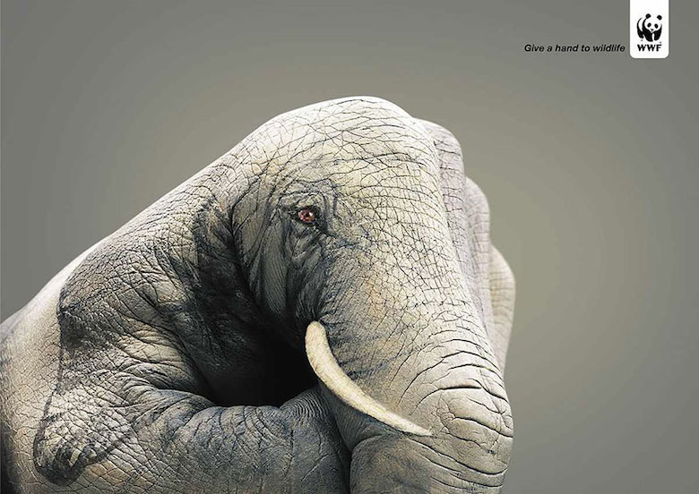 WWF: Elephant