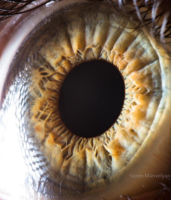 'Your Beautiful Eyes' - Amazing Close-Up Photos Of Human ...