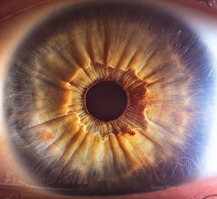 Beautiful human eyes
