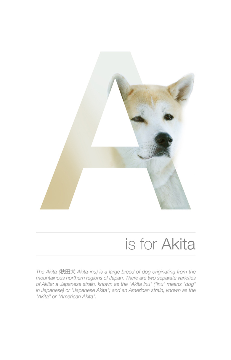 Alphabetical dog breeds - Akita