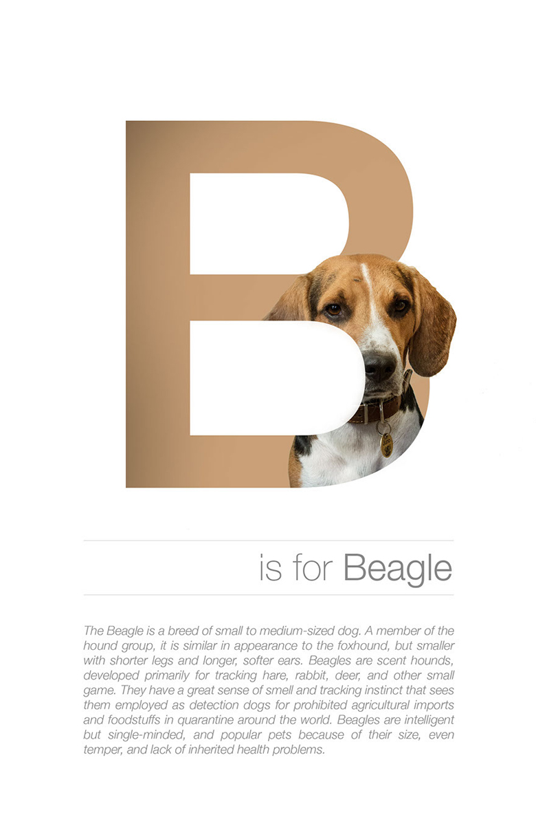 Alphabetical dog breeds - Beagle