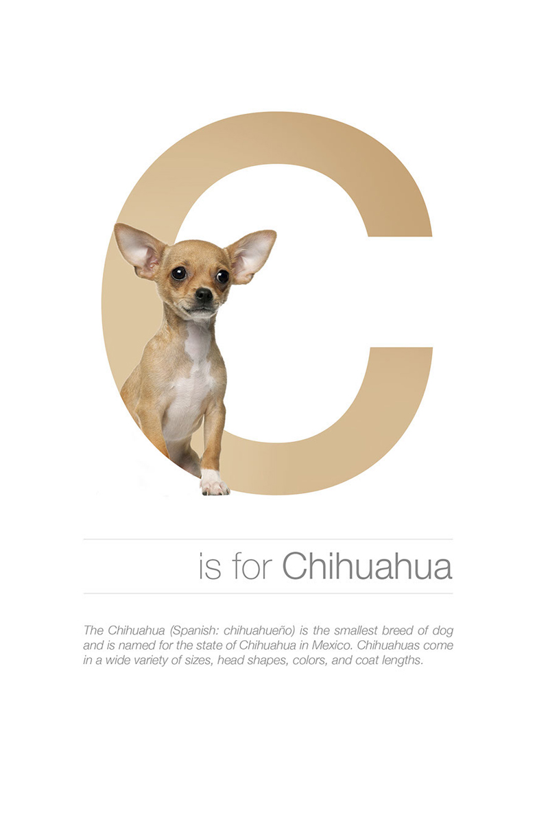 Alphabetical dog breeds - Chihuahua