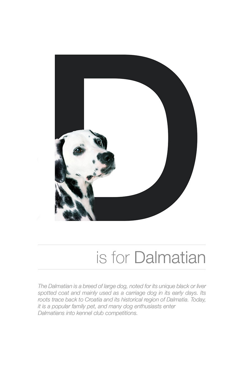 Alphabetical dog breeds - Dalmatian