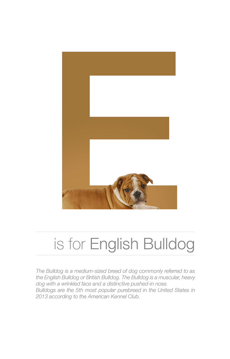 Alphabetical dog breeds - English Bulldog
