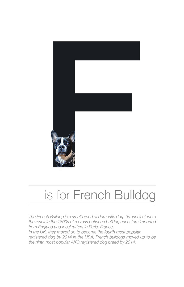 Alphabetical dog breeds - French Bulldog