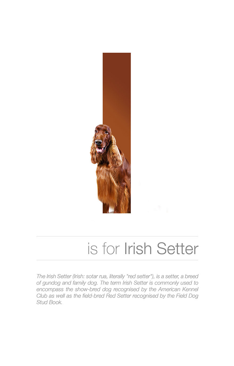 Alphabetical dog breeds - Irish Setter