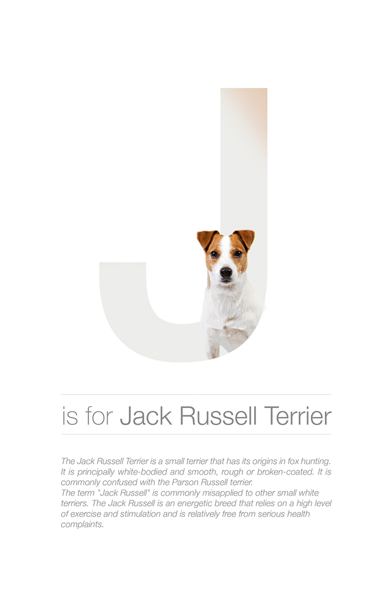 Alphabetical dog breeds - Jack Russell Terrier