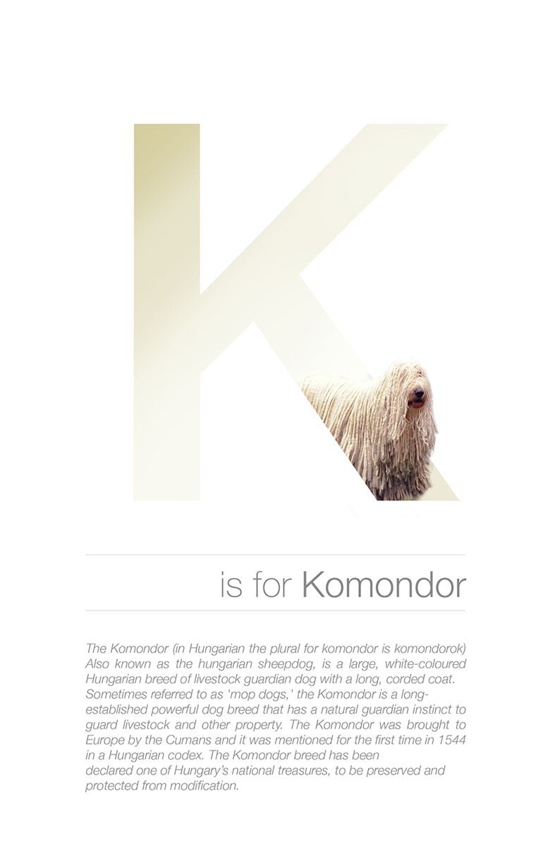 Alphabetical dog breeds - Komondor