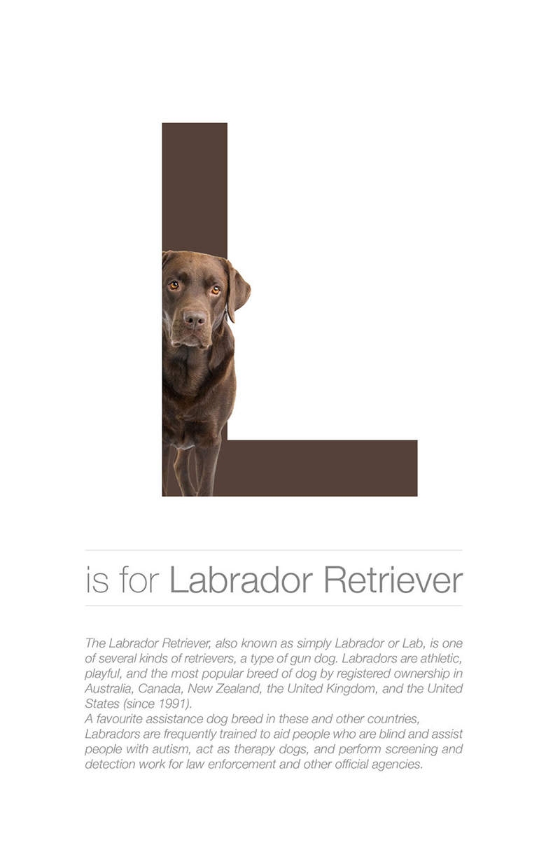 Alphabetical dog breeds - Labrador Retriever