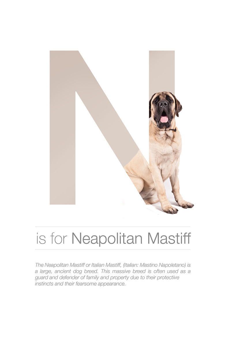 Alphabetical dog breeds - Neapolitan Mastiff