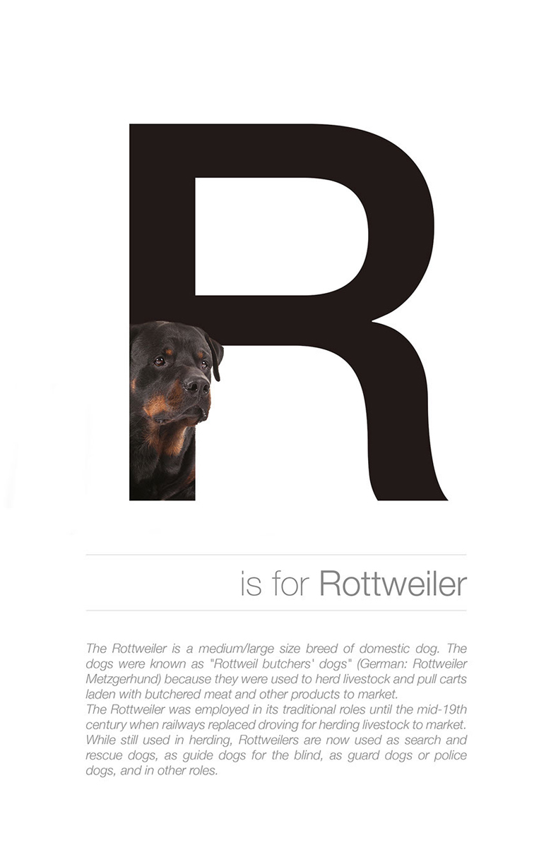 Alphabetical dog breeds - Rottweiler