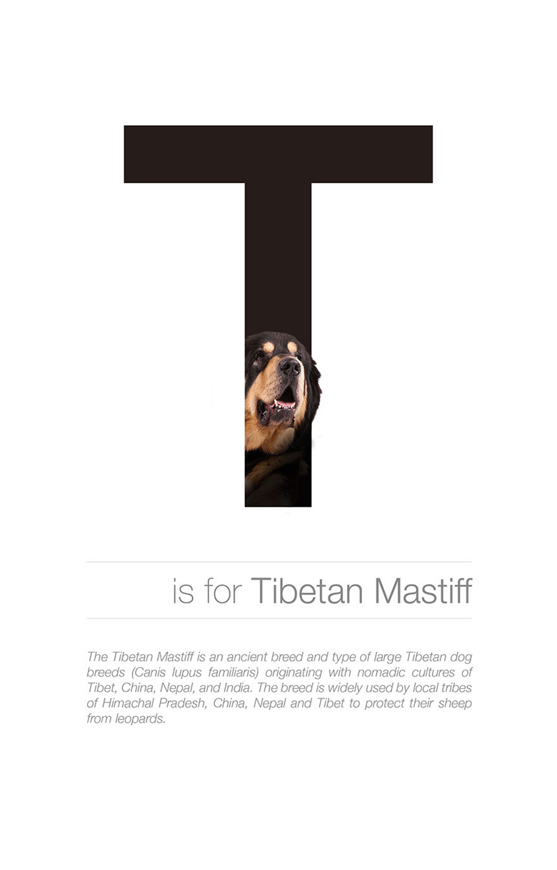 Alphabetical dog breeds - Tibetan Mastiff