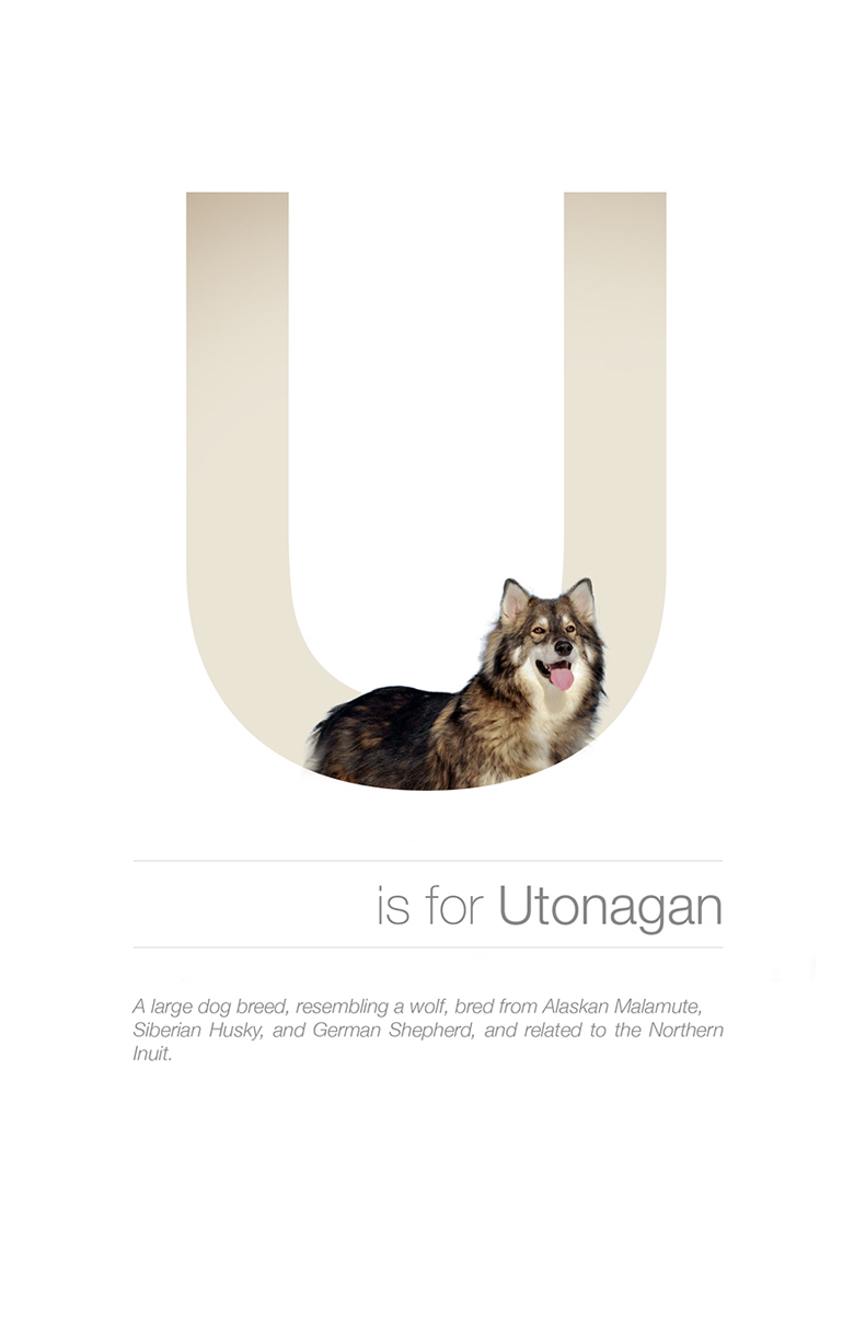 Alphabetical dog breeds - Utonagan