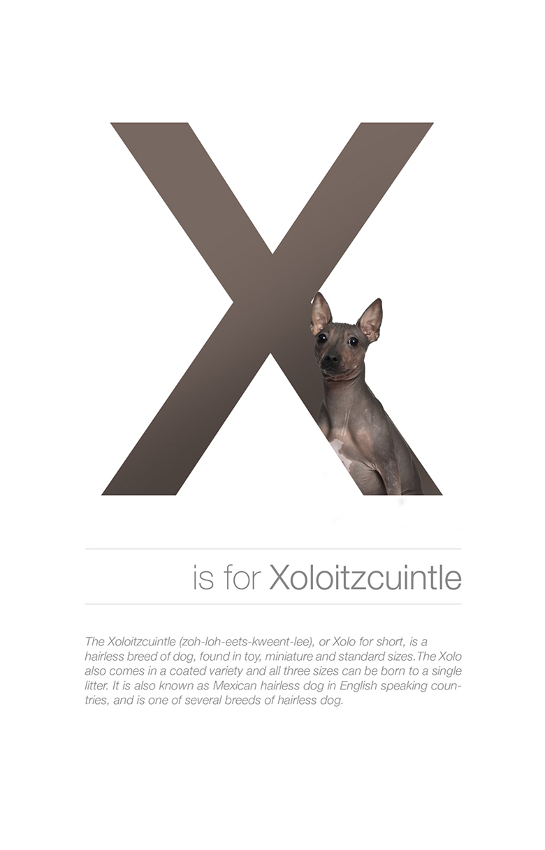 Alphabetical dog breeds - Xoloitzcuintle