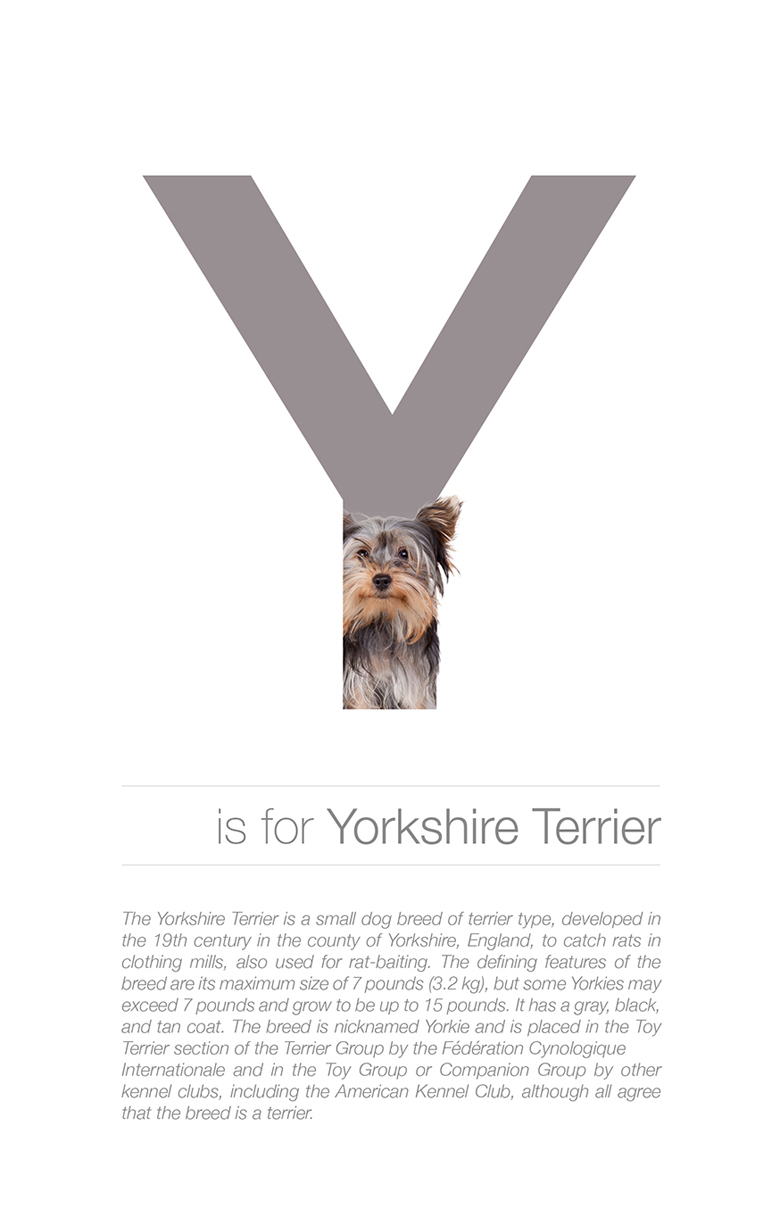 Alphabetical dog breeds - Yorkshire Terrier
