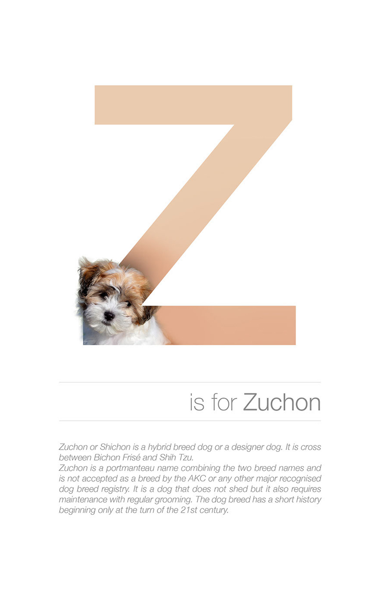 Alphabetical dog breeds - Zuchon