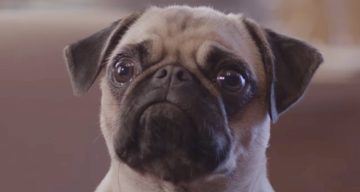 These Dog Food Ads Are The Funniest Thing You'll See Today