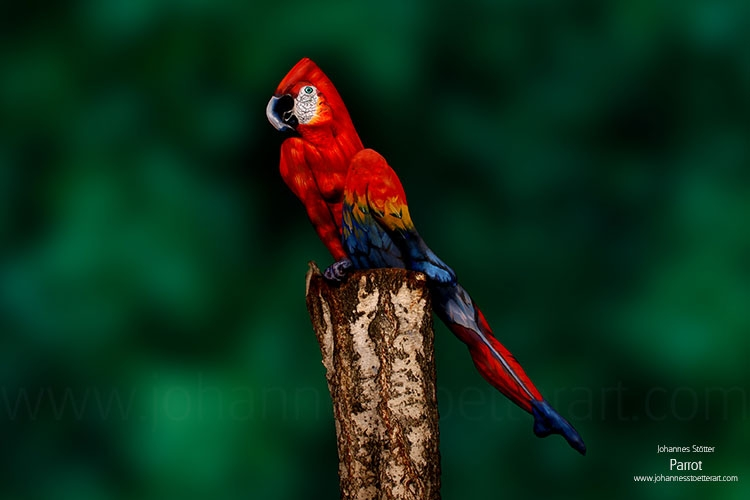 body-art-paintings-nature-inspired-illusions-animal-3a