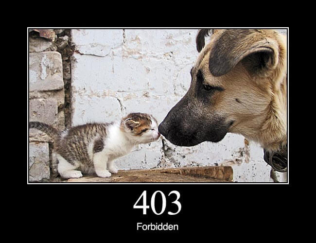 403 Forbidden: The request was a legal request, but the server is refusing to respond to it. Unlike a 401 Unauthorized response, authenticating will make no difference.