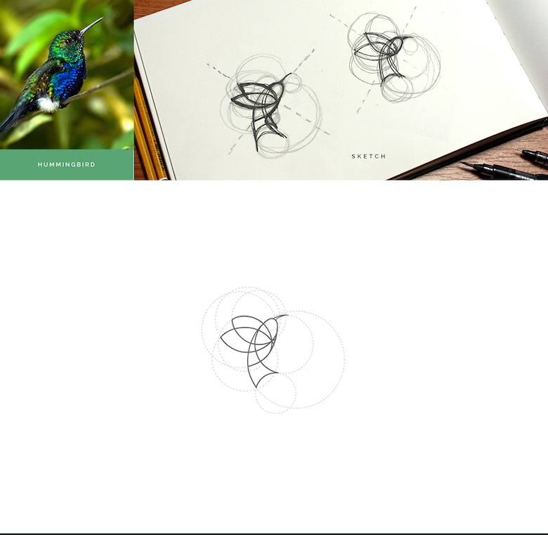 Color animal logos based on circular geometry - Hummingbird (1)