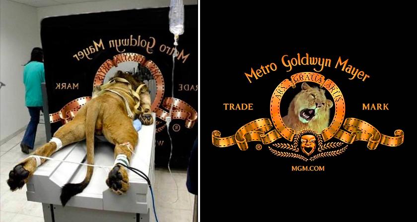 5 true stories behind famous hollywood studio logos